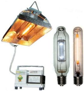 HID Lamps for hydroponics
